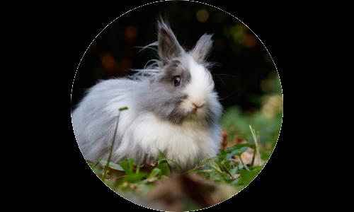 Bunny Wabbit - Best Cruelty Free